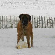 spelen sneeuw dirk