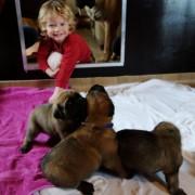 Linus en de pups