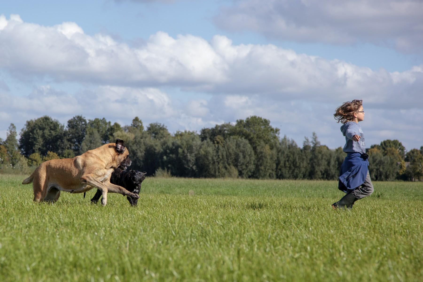 lekker genieten - Hillse Mastiffs