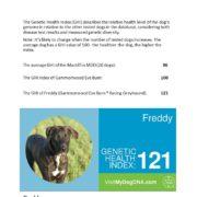 genetische gezondheid - Hillse Mastiff